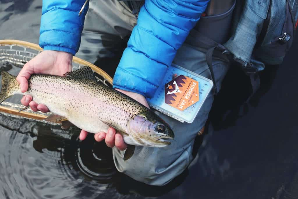 Trout Fish Farming: Everything You Should Know
