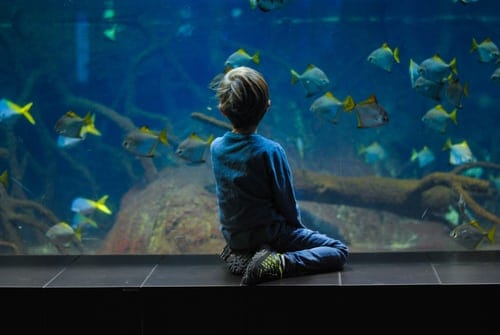 What Types Of Fish Tank Is Right For Me?